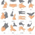 sobra de animales con manos