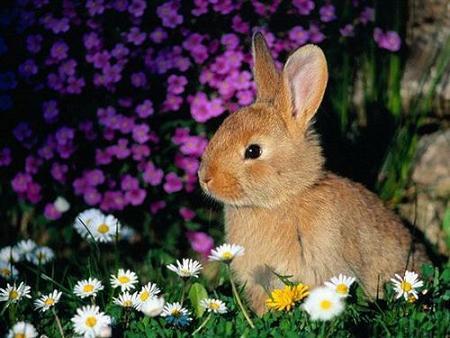 conejos juego equipos