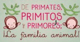 primates-primitos-y-primores