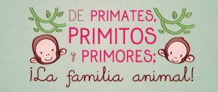 Primates primitos y primores